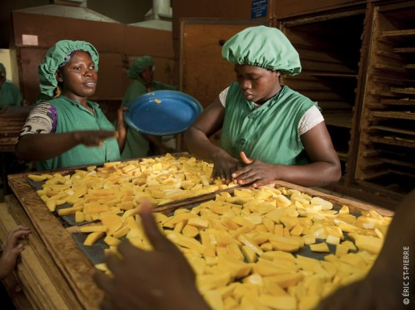 Productrices de mangues au Burkina Faso